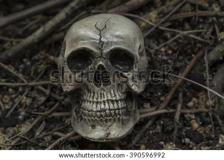human skull in forest darkness concept; horror halloween - stock photo