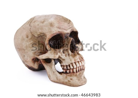 Human skull isolated on a white background. - stock photo