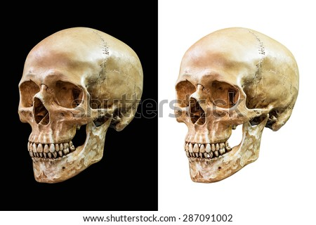 Human skull isolated on black and white background with clipping path - stock photo