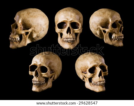 Human Skull isolated on black background. Many different angle views - stock photo