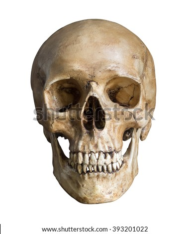 Human skull, isolated on white background with clipping path - stock photo