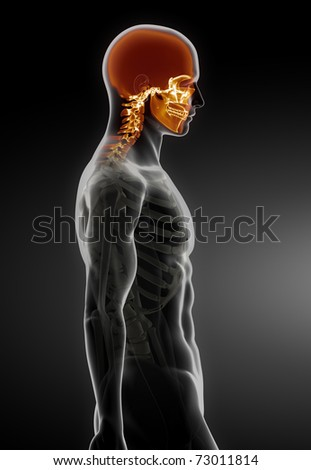 Human Skull Medical Scan - stock photo