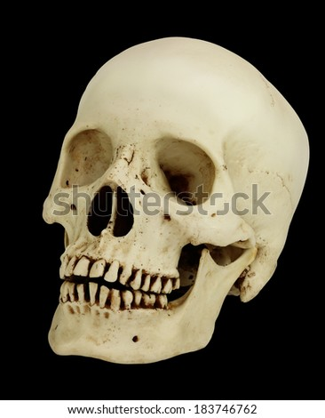Human skull model isolated  with working path - stock photo