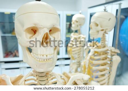 human skull model on laboratory - stock photo