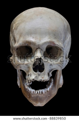 Human Skull On Black Background Stock Photo Download Now 88839850