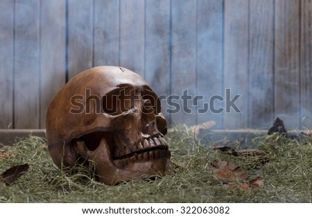 Human skull on a smoky wood background - stock photo