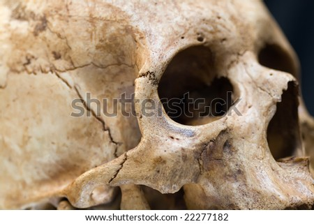 Human skull on black background. Closeup