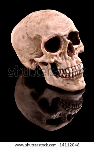 Human skull on black background with reflection. - stock photo