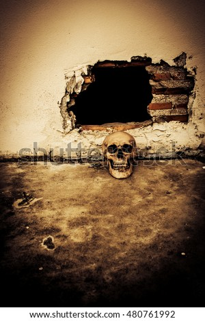 human skull on breaking concrete wall in abandoned househorror background for halloween concept and