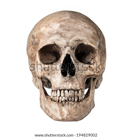 skull face stock images, royalty-free images & vectors | shutterstock, Skeleton
