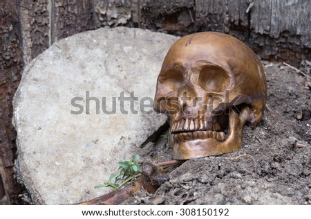 Human skull remains on an old grave - stock photo