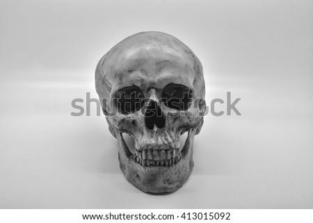 Human skull still life - stock photo