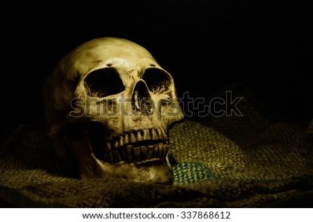 human skull still life background - stock photo