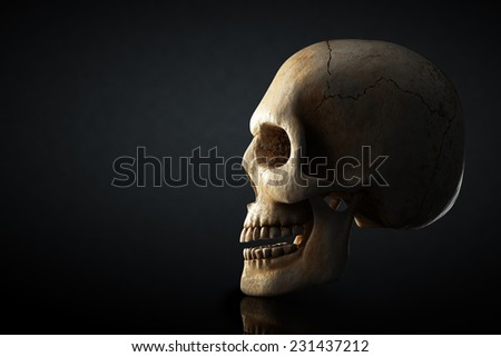 Human skull still life with side view on dark background - 3D artwork - stock photo