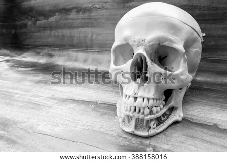 human skull  with black and white color concept - stock photo