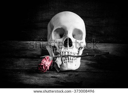 Human skull with rose on grunge background,Still life - stock photo