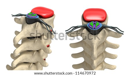Human spine in details: Vertebra, bone marrow, disc and nerves - stock photo