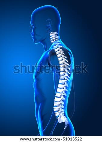 Human spone side view - stock photo