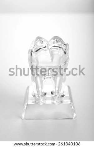Human tooth model isolated on white - stock photo