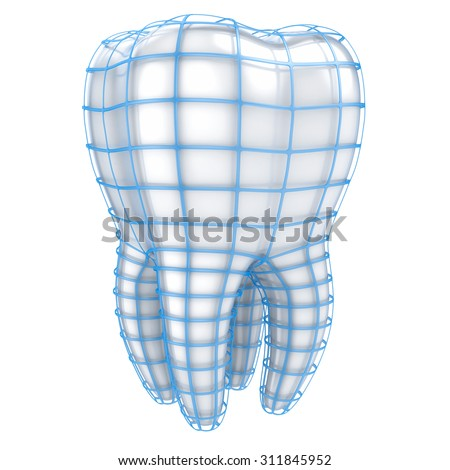 Human Tooth with Grid isolated on white background