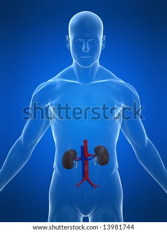 human urinary - stock photo