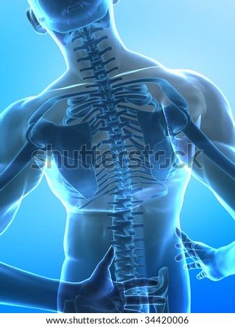 human x-ray spine - stock photo