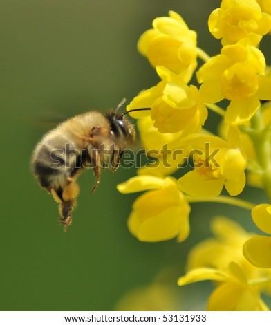 humble-bee - stock photo