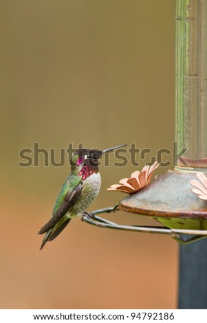 Hummingbird and feeder. - stock photo