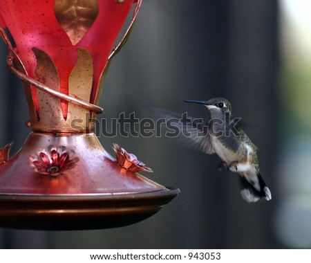 hummingbird at feeder - stock photo