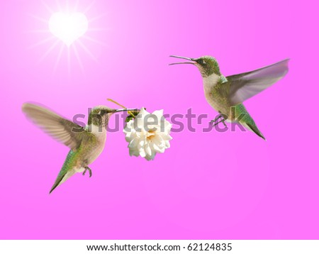 Hummingbird carrying a rose for another, with sun in a shape of heart in the background, Valentine design