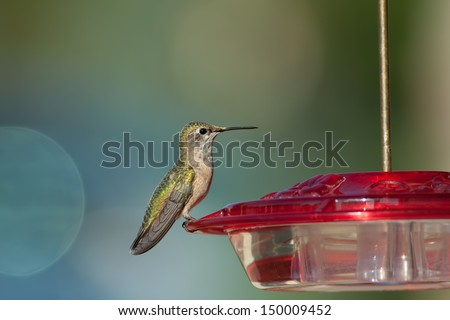 Hummingbird perched on red bird feeder with a blurred background - stock photo