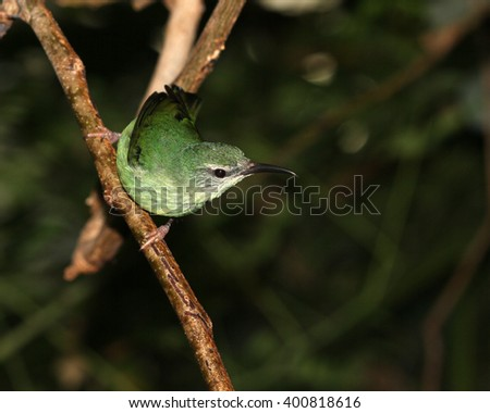 Hummingbird sitting on a branch