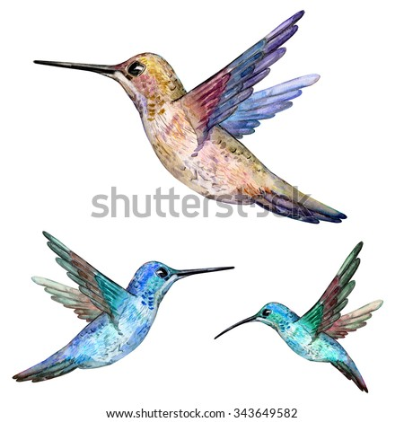 hummingbird. watercolor painting - stock photo