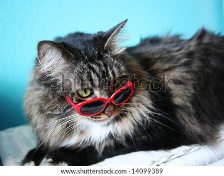 humorous image of a cat in sunglasses...shallow depth of field - stock photo