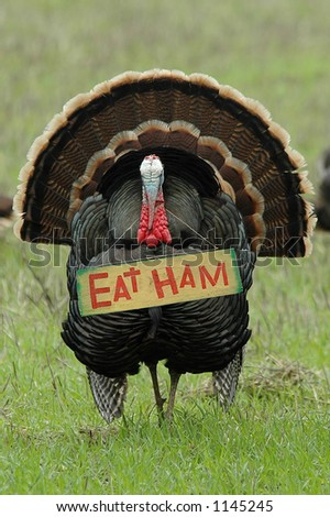 "humorous photo of a wild turkey carrying an ""eat ham"" sign"