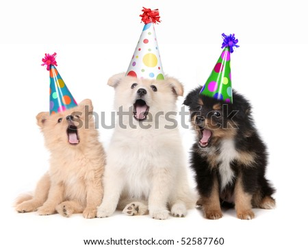 Humorous Puppies Singing Happy Birthday Song Wearing Silly Hats - stock photo