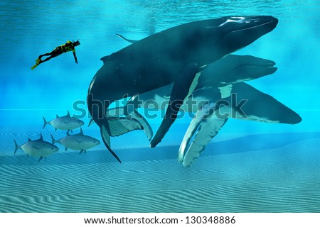 Humpback Dive - A diver swims with a pod of Humpback whales as three tuna cruise by. - stock photo