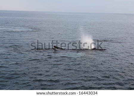 Humpback Whale 2 - stock photo
