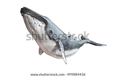 Humpback whale on an isolated white background. 3d rendering