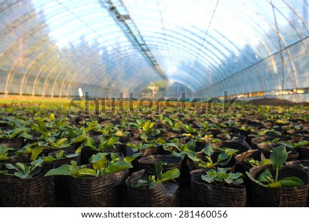 Hundreds of green saplings in a greenhouse - stock photo