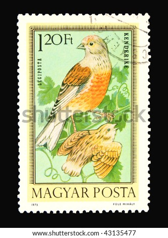HUNGARY - CIRCA 1973: A stamp printed in Hungary showing birds, circa 1973