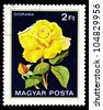 """HUNGARY - CIRCA 1982: A stamp printed in Hungary shows a rose with the inscription """"Diorama"""", from the series """"Flowers"""", circa 1982 - stock photo"""