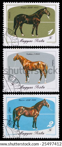 HUNGARY- CIRCA 1985: A stamp printed in hungary shows breeds of horses, horses series, circa 1985 - stock photo