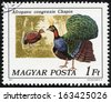 HUNGARY - CIRCA 1977: A stamp printed in Hungary shows Congo peacock (Afropavo congensis Chapin), series Birds, circa 1977 - stock photo