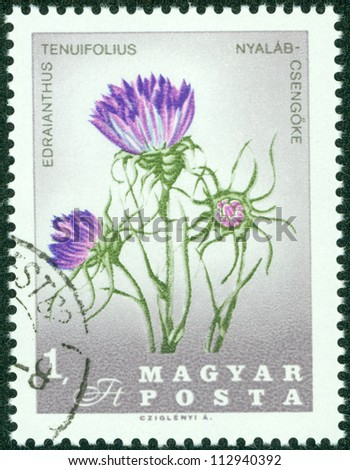 HUNGARY - CIRCA 1967: A stamp printed in Hungary shows edraianthus tenuifolius, series, circa 1967