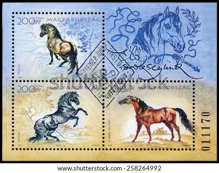 HUNGARY - CIRCA 2006: A stamp printed in Hungary shows hungarian horses, circa 2006 - stock photo