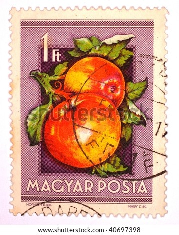 HUNGARY - CIRCA 1966: A stamp printed in Hungary shows image of two apples, series, circa 1966 - stock photo
