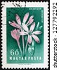 HUNGARY - CIRCA 1958: a stamp printed in the Hungary shows Autumn Crocus, Colchicum Arenarium, Flower, circa 1958 - stock photo