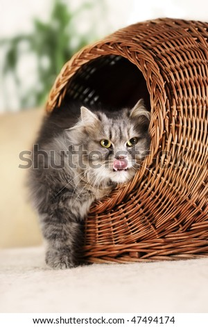 hungry cat - stock photo