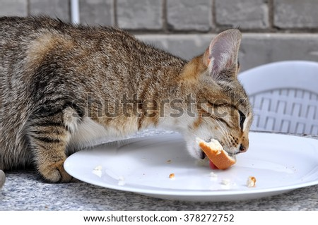 hungry cat eating white bread and butter on the table - stock photo